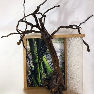 "Eva M. Capobianco • <em>FLT – Map 27, Moss, Stream and Root</em> • Photo, re-used wood and glass • 21""×26""×12"" • $475.00 • <a class=""purchase"" href=""https://state-of-the-art-gallery.square.site/product/eva-m-capobianco-flt-map-27-moss-stream-and-root/278"" target=""_blank"">Buy</a>"