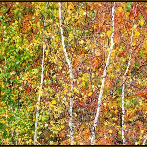 """David Watkins Jr • <em>Aspens in Transition, 10/2008, Acadia</em> • Archival pigment on canvas • 40""""×30"""" • $525.00 • <a class=""""purchase"""" href=""""https://state-of-the-art-gallery.square.site/product/david-watkins-jr-aspens-in-transition-10-2008-acadia/320"""" target=""""_blank"""">Buy</a>"""