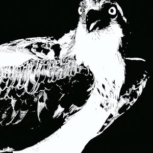 """Nancy V. Ridenour • <em>Osprey Abstract</em> • Archival inkjet on canvas • $150.00 • <a class=""""purchase"""" href=""""https://state-of-the-art-gallery.square.site/product/nancy-v-ridenour-osprey-abstract/346"""" target=""""_blank"""">Buy</a>"""
