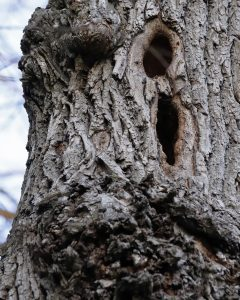 """Nancy Ridenour • <em>Willow Tree with Bird Holes and Burls</em> • Digital image • $150.00<a class=""""purchase"""" href=""""https://state-of-the-art-gallery.square.site/product/nancy-ridenour-willow-tree-with-bird-holes-and-burls/425"""" target=""""_blank"""">Buy</a>"""