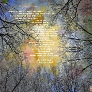 "Margaret Nelson • <em>In Praise of Trees</em> • Digital print • 10""×9½"" • $150.00"