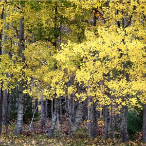 "David Watkins Jr • <em>A Yellow Wood</em> • Archival pigment print • 13""×9"" • $185.00"