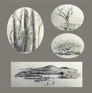 "Frances Fawcett • <em>Tree Sketches 1</em> • Graphite pencil on paper • 12""×12"" • NFS"