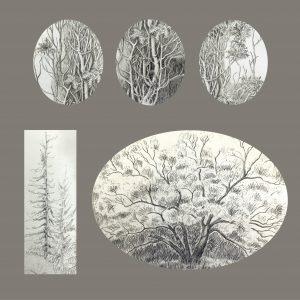 "Frances Fawcett • <em>Tree Sketches 3</em> • Graphite pencil on paper • 12""×12"" • NFS"