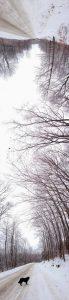 """Tim Larkin • <em>Winter</em> • Archival pigment print • 16""""×48"""" • $150.00"""