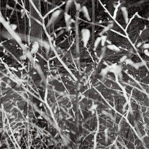 "Harry Littell • <em>Six Mile Creek</em> • Archival digital print • 41""×42"" • $1,500.00"