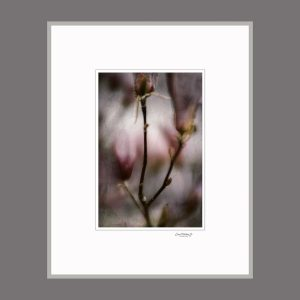 "David Watkins Jr • <em>Magnolia Buds, Fog and Snow</em> • Archival pigment print • 16""×20"" • $175.00"