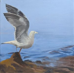 """Diana Ozolins • <em>Herring Gull Study</em> • Acrylic on canvas • 12""""×12""""×"""" • $50.00<a class=""""purchase"""" href=""""https://state-of-the-art-gallery.square.site/product/diana-ozolins-herring-gull-study/567"""" target=""""_blank"""">Buy</a>"""