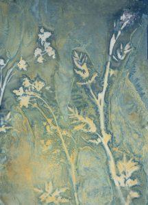 "Christine Chin • <em>Invasive Species Cyanotypes: Wild Parsnip (Pastinaca sativa)</em> • Cyanotype photogram • 11""×15"" • $70.00"