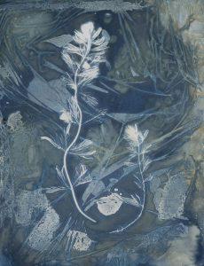 "Christine Chin • <em>Invasive Species Cyanotypes: Eurasian Watermilfoil (Myriophyllum spicatum)</em> • Cyanotype photogram • 9""×11"" • $50.00"