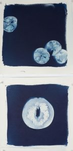 """Christine Chin • <em>Citrus Suite</em> • Cyanotype photograms (originals) • 9""""×18"""" • $45.00<a class=""""purchase"""" href=""""https://state-of-the-art-gallery.square.site/product/christine-chin-citrus-suite/571"""" target=""""_blank"""">Buy</a>"""