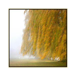 "David Watkins Jr • <em>Willows in the Mist No.1</em> • Archival pigment on canvas • 30""×30"" • $425.00"