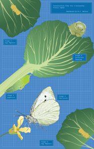 "Margy Nelson  • <em>Blueprint for a Butterfly </em> • Limited edition digital print  • 22""×12"" • $250.00"